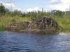 beaver-lodge-on-hte-bloodvein
