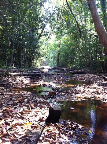 Stream bed in Cambodia
