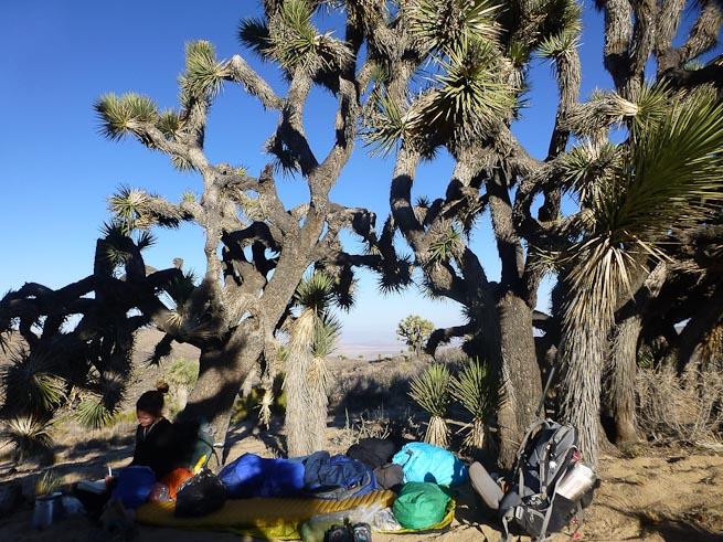 Joshua Tree National Park camp