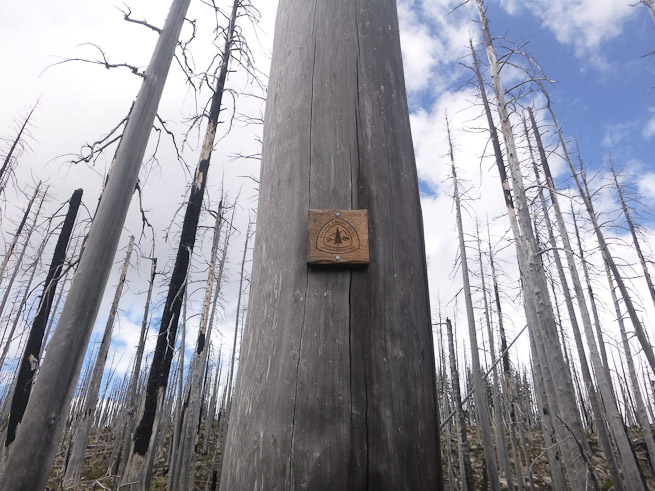 Burn area in Oregon. Photo: Israh Goodall.