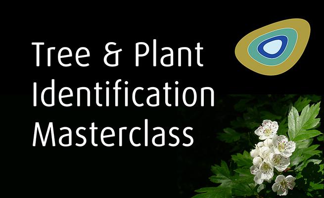 Tree and Plant Identification Masterclass Frontier Bushcraft